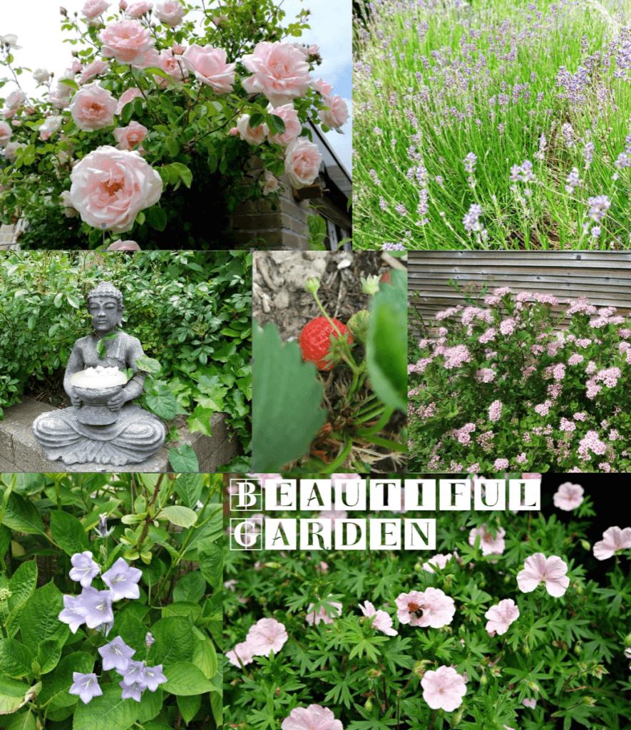 Beautiful garden - My Little Happiness