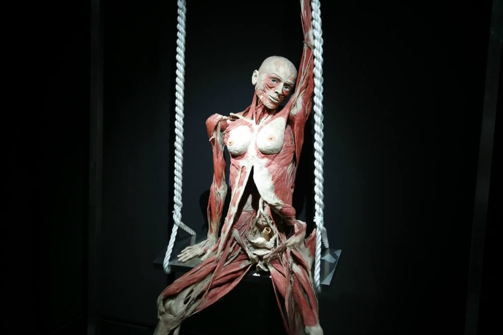 BODY WORLDS THE HAPPINESS PROJECT