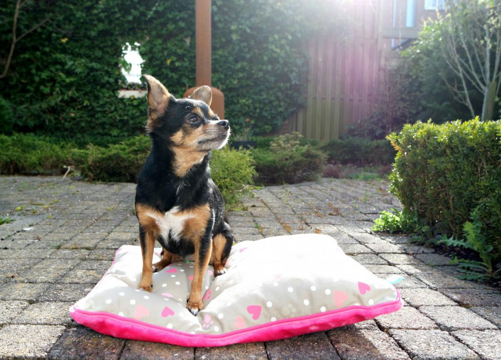 Hondenkussen Lief | Ranzijn Dier en Tuin