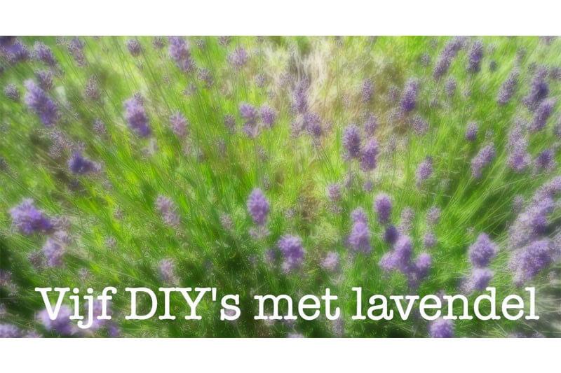 5 leuke tips met Lavendel | Lavendel brengt je rust!