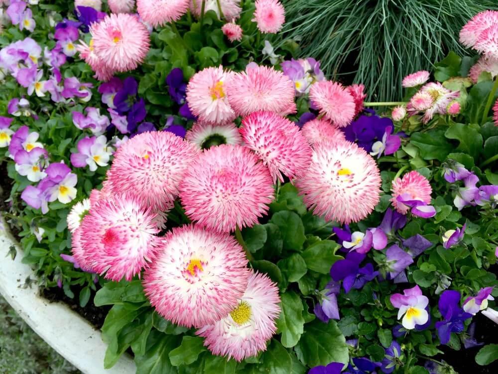 Thermen Bussloo bloemen
